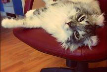 "My cat ""Macintosh"""