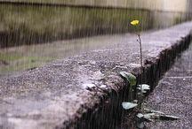 rain♡