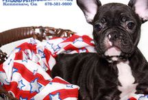 Star Spangled Pets! / Happy 4th of July! Check out www.petlandkennesaw.com for more info about our store!