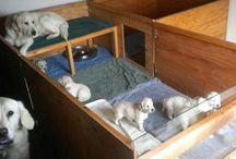 Dog breeding kennel