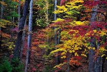 příroda Tennesee