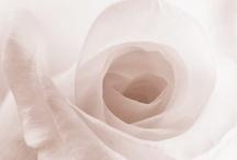 Flowers / by Ann Nicholson