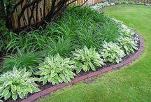 yard decor and plant ideas