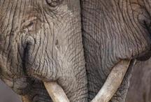 Amazing Animals / by Diane Schindelar
