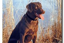 Hunting Dog Wall Decor Art Print Posters