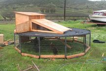 Chicken hutch ideas