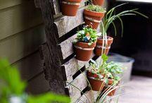 My balcony garden / Garden