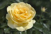 Kentucky Gardens / Beautiful gardens in Kentucky as featured by the Lexington Herald-Leader/Kentucky.com.