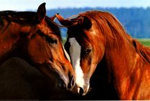 Horse Posters / Beautiful horse posters, framed or unframed, perfect for home or office.