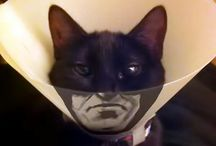 Embrace the batmanlife