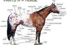 Horse Life / by Amanda Wylie