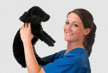 Veterinary Assistant Training Program