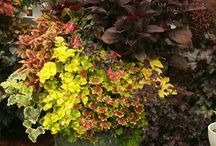 gardening / by Michelle Layton