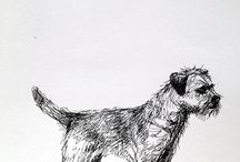 Border Terrier / all the Border terriers... but especially Keshu :)