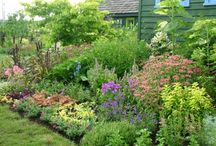 Cottage Gardens / by Linnea Wieland