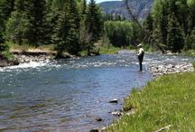 fish on the conejos river