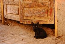 black cats / by Lisa Garrison