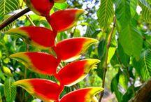 Plantas - Paisagismo