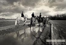 horsehunting