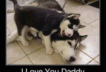 Male dogs and their puppies