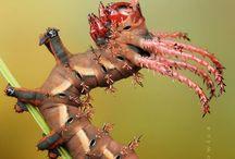 Strange creatures / Beautifull, but strange animals