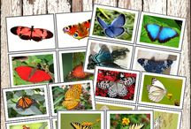 Butterfly Learning Activities / Discover fun, butterfly themed learning activities for your kindergarten or Montessori classroom! Use these ideas to create hands-on kids activities!  #montessori #kindergarten #handsonactivities