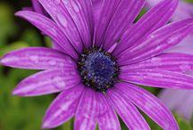 todo para mi jardin / Decoracion y creacion de un bello jardin para disfrutar todo el año