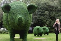Piggy's / by Vicky Mcguire
