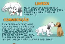 Para o Simba