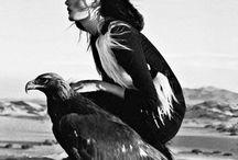 Birds of prey / Raptors