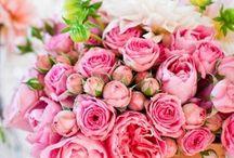 Flowers  / by Lana E