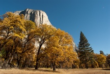 Fall Photo Trips / Fall is too beautiful a season to stay indoors! Join us in Yosemite, Eastern Sierra, Monument Valley, and elsewhere for an exciting, inspiring photographic adventure.