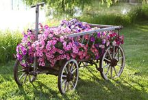 Kwiaty i Ogrody/ Flowers & Gardens / by Anna Kopczynska