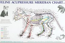Animal acupucture / Acupoints, meridian charts