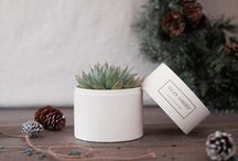 Holiday Gifts by Lula's Garden / Christmas gifts. Succulents in a planter gift box. Not DIY. Green and eco-friendly gift that keeps on giving. Gift for moms, dads, girlfriend, BFF, coworkers, employees, boss and clients.