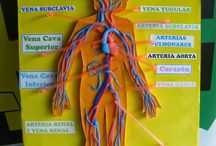 νεύρα κ αρτηριες