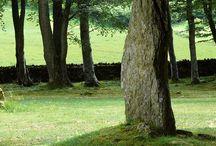 menhir-dolmen