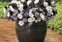 Bright and beautiful container gardens