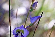 Cape Floral Kingdom, South Africa / by Klaradyn