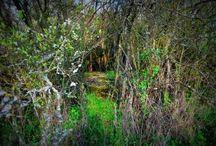 prosty sposób na spokojny spacer w Uniejowie / jesteś w Uniejowie i chcesz odpocząć od zgiełku uzdrowiska?  nie lubisz spacerować bez sensu po lesie? chcesz przeżyć przygodę? szukaj schronów pod Uniejowem!