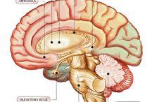 beautiful brains
