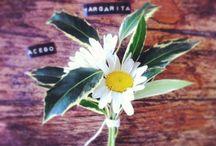 Boutoniers by Laforesta / Mini ramitos de flores