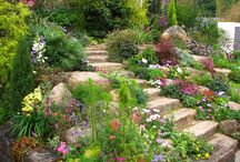 A - Slope / Landscaping a slope / by Betsy Pedersen