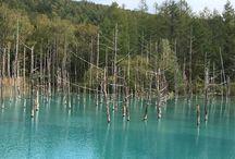 旅 / 北海道、美瑛の青い池。最近観光スポットになってるらしい。