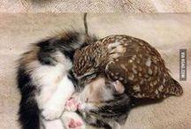 tiny baby animals