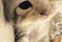 True Love. / Animals.