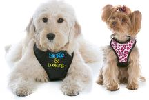 WagSwag Dog Harness and Accessories / Our patented design enables pet owners to change the logo/artwork on the front.  It is a quick and affordable way to build your dog's wardrobe.  Made from breathable mesh, nylon webbing and easy-to-use squeeze buckles.  One harness.. Endless Possibilities!  Look for our coordinating Fashion Fronts (sold individually).