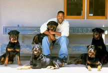 Beroemdheden en hun honden / celebrities and their dogs