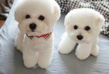 Câini frumosi