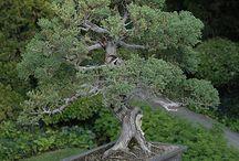 bonsaje / bonsaje